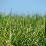Anlägga gräsmatta